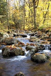 Mémoire sur le « Projet de loi numéro 132, loi concernant la conservation des milieux humides et hydriques »