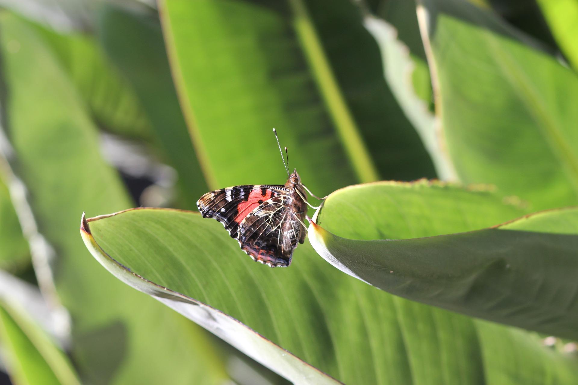 butterfly-1148840_1920